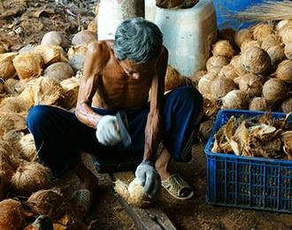 coconut-oil-farming