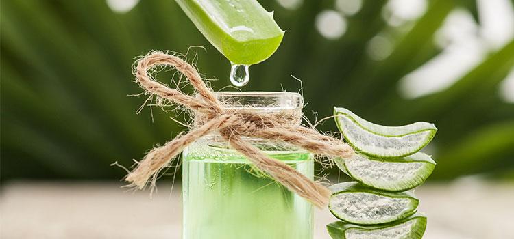 aloe vera leaf juice dripping into jar